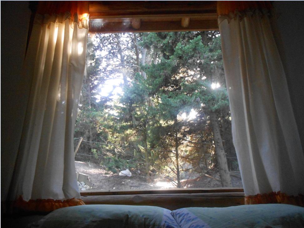 vista del bosque desde hab cabaña 3