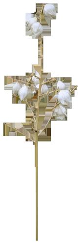 tubes_fleurs_tiram_705