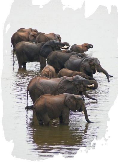 tubes_elephants_tiram_607