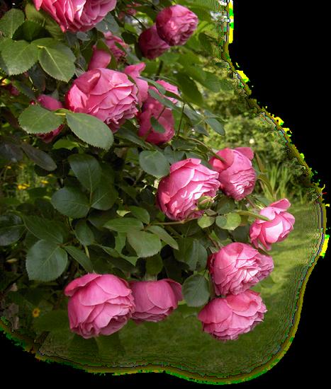 tubes_fleurs_tiram_192