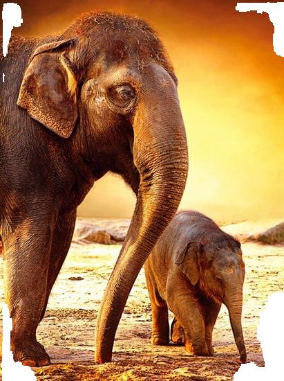 tubes_elephants_tiram_608
