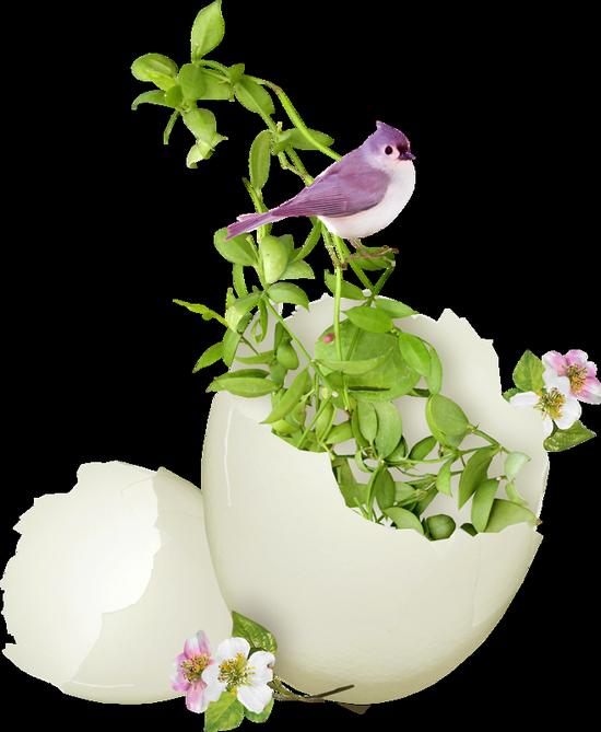 fleurs_paques_tiram_268