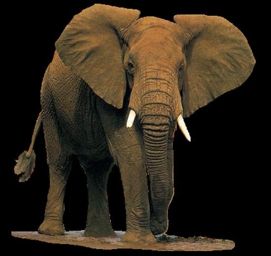 tubes_elephants_tiram_259