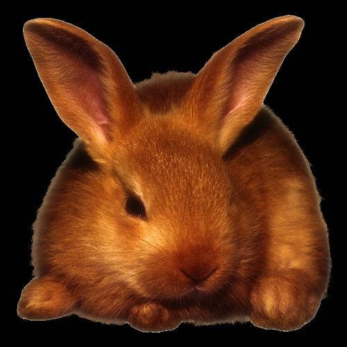 lapins_paques_tiram_698