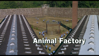 ANIMAL-FACTORY-22m37s248.png