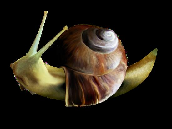 tubes_escargots_tiram_90