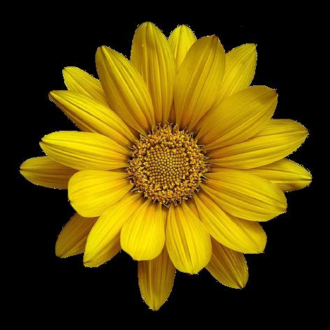 tubes_fleurs_tiram_622