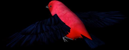 tubes_oiseaux_tiram_208