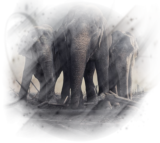tubes_elephants_tiram_622