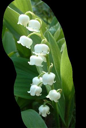 tubes_fleurs_tiram_892