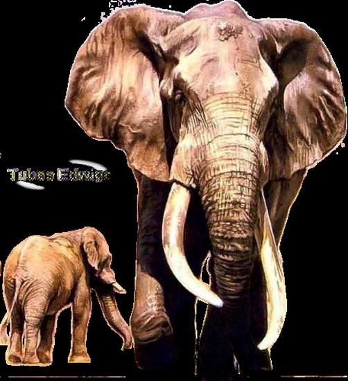 tubes_elephants_tiram_645