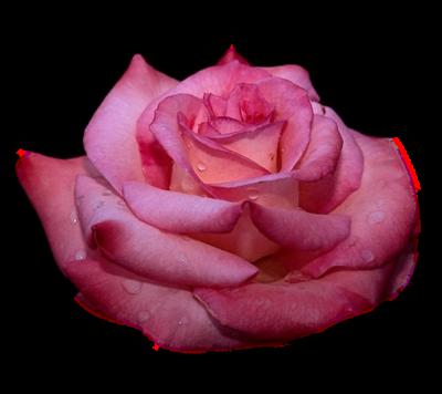 tubes_fleurs_saint_valentin_tiram_285