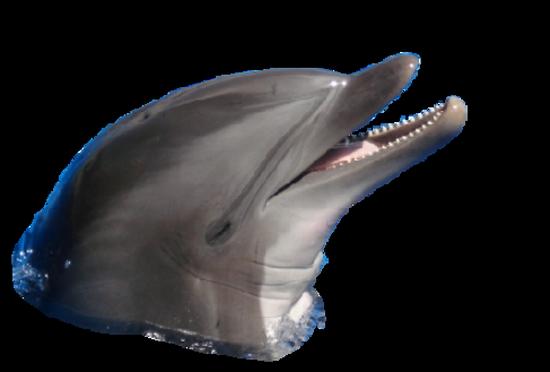 tubes_dauphins_tiram_176