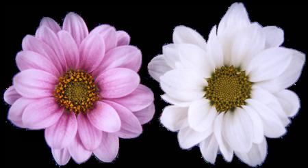 tubes_fleurs_tiram_850