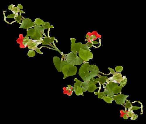 tubes_fleurs_tiram_618