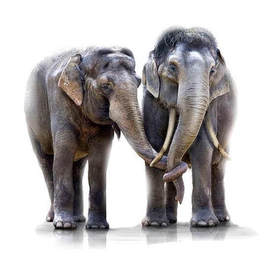 tubes_elephants_tiram_129