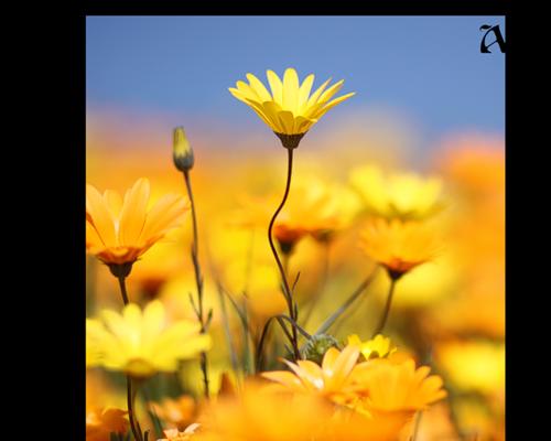 tubes_fleurs_tiram_563