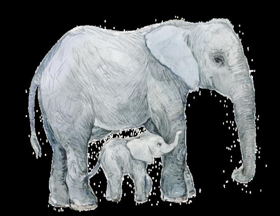 tubes_elephants_tiram_142