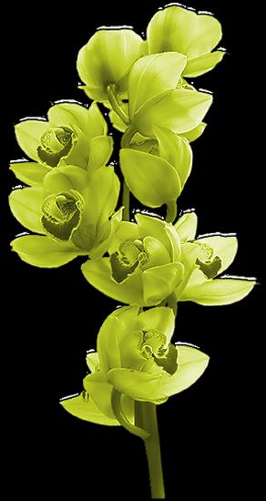 tubes_fleurs_tiram_296