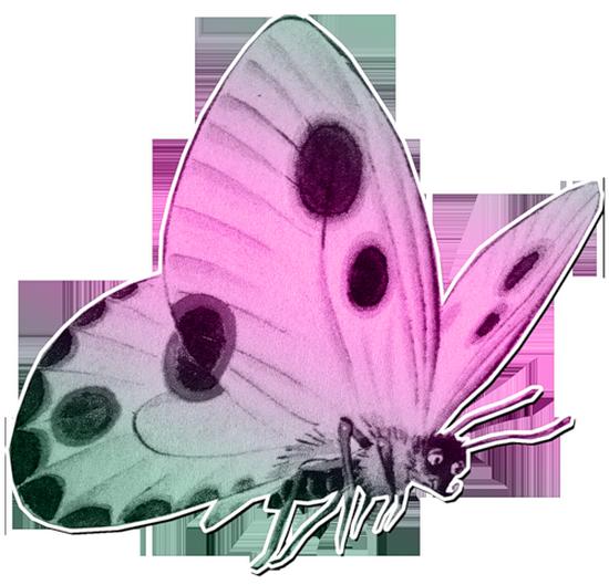 tubes_papillon_tiram_511