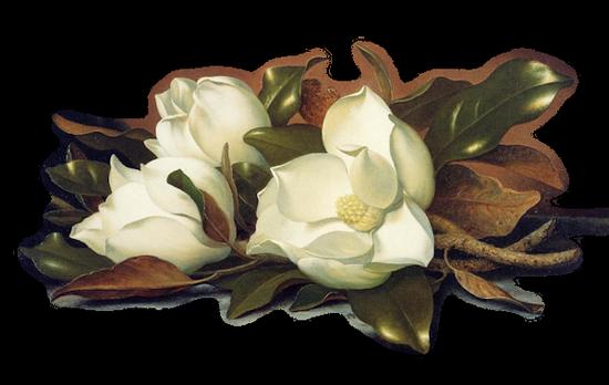 tubes_fleurs_tiram_470
