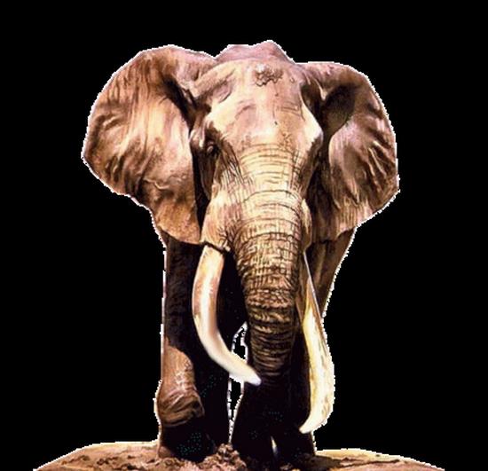 tubes_elephants_tiram_271