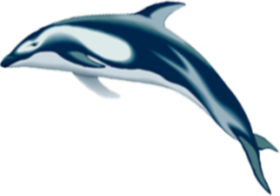 tubes_dauphins_tiram_54