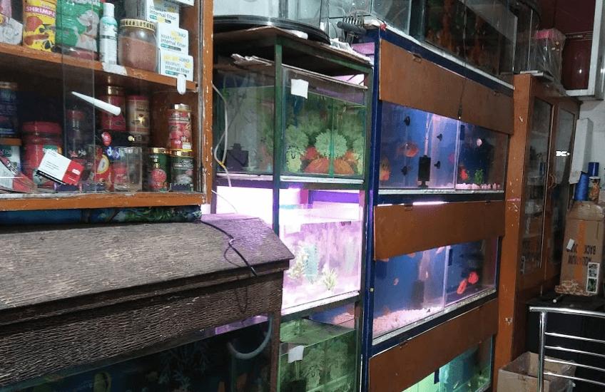 Baba Mungipa Sai Fish Aquarium Shop Find Pet Stores Near You