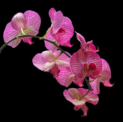 tubes_fleurs_tiram_651