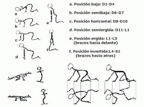 ejercicios-klapp,-escoliosis-cuadrupedia