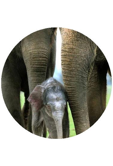 tubes_elephants_tiram_374