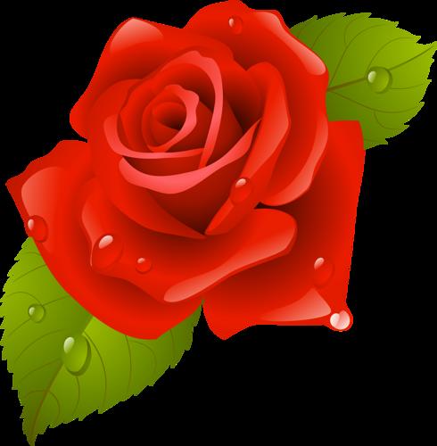 tubes_fleurs_saint_valentin_tiram_184