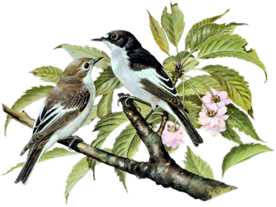 tubes_oiseaux_tiram_138