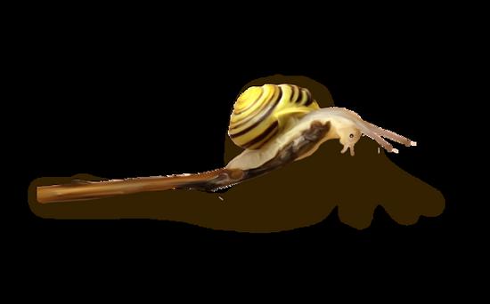 tubes_escargots_tiram_114