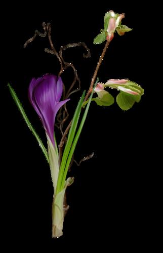 fleurs_paques_tiram_55