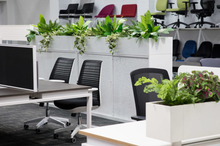 растения в офисе по фен-шуй