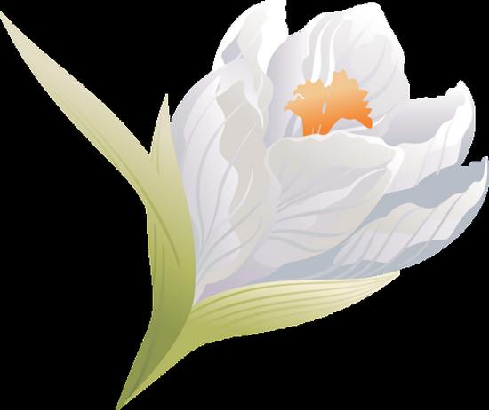 tubes_fleurs_tiram_395