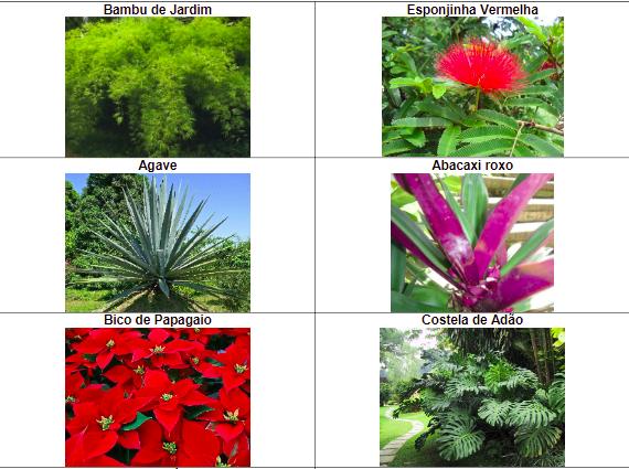 arbustos-silvestres-1