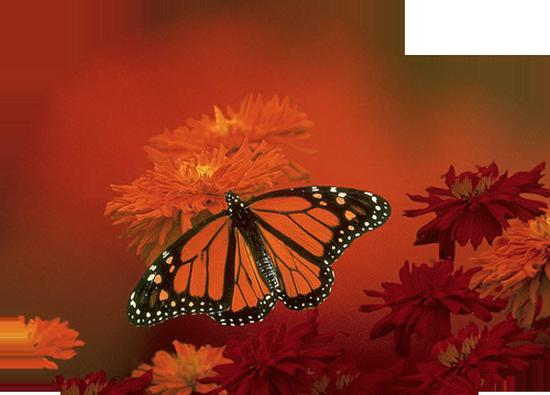 tubes_papillon_tiram_180