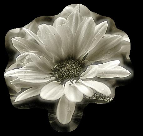 tubes_fleurs_tiram_668