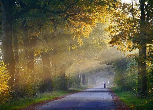 The sun streams through the branches of an oak tree.