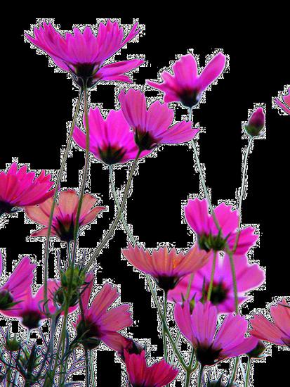 tubes_fleurs_tiram_189