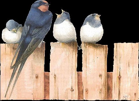 tubes_oiseaux_tiram_245