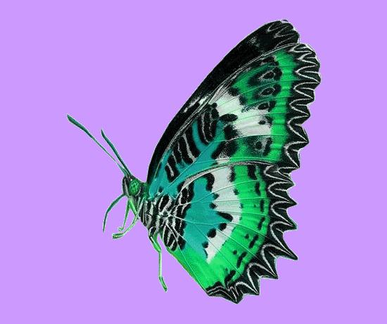 tubes_papillon_tiram_160