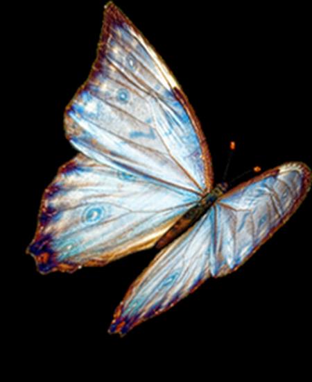 tubes_papillon_tiram_651