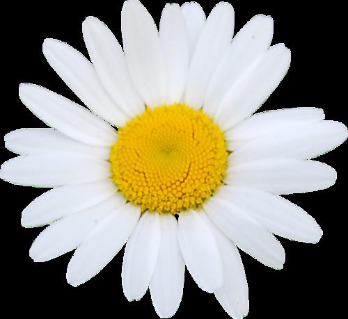 fleurs_paques_tiram_28