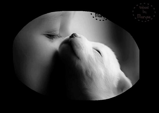 chien_tiram_153