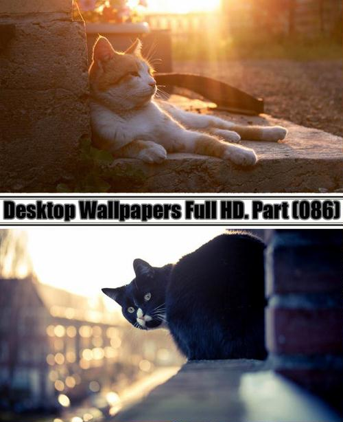 Desktop Wallpapers  HD. Part 86