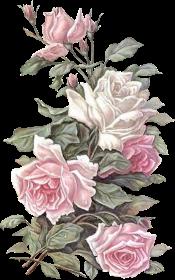 tubes_fleurs_saint_valentin_tiram_113