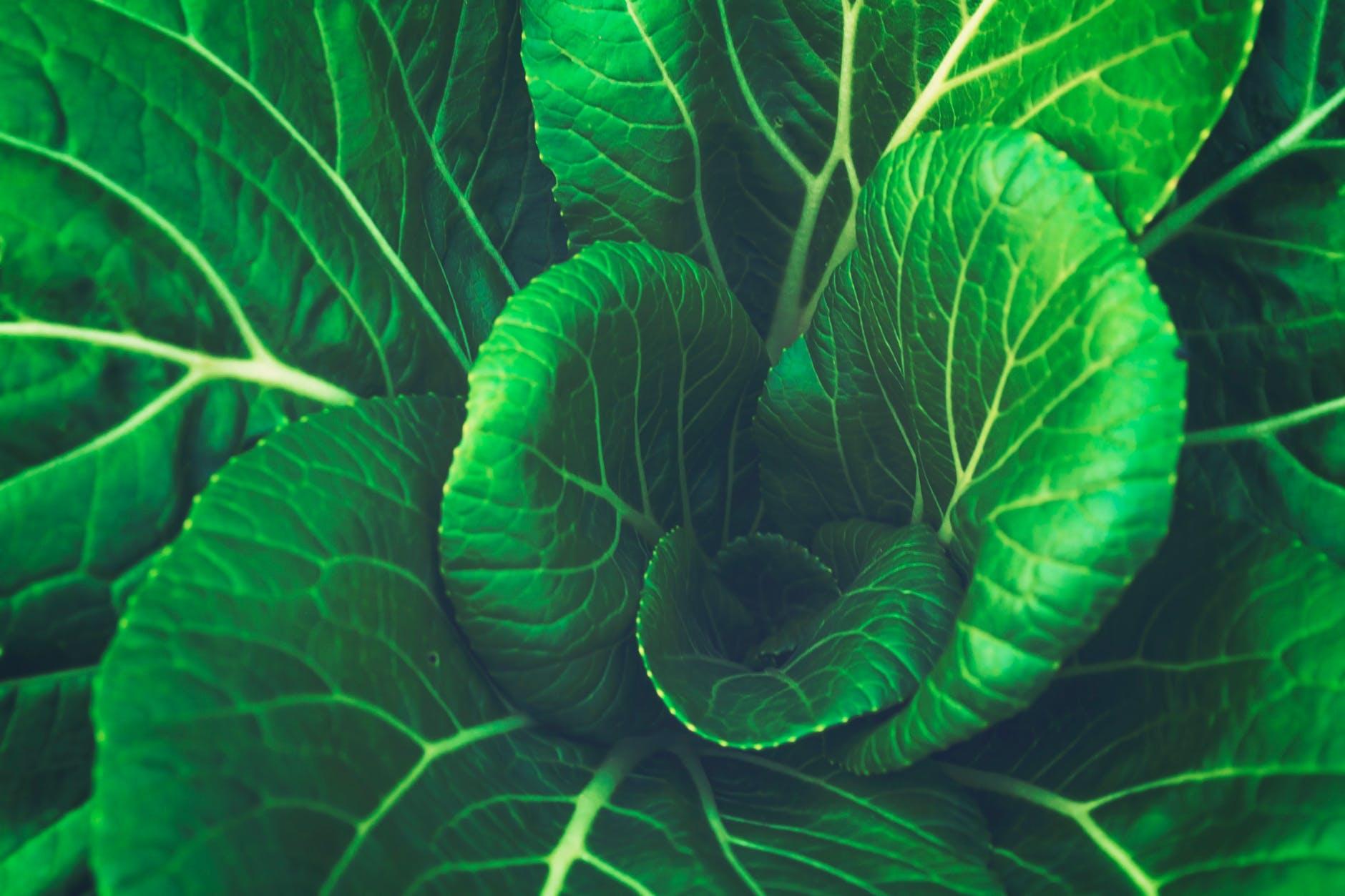 5 اغذية تساعد على تقوية النظر